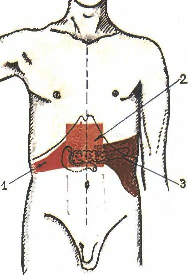 При панкреатите различное количество ферментов может попадать в органы и разрушать их ткани.