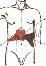 Области болевых ощущений при панкреатите